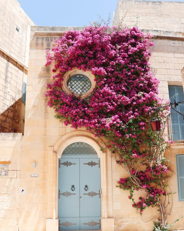 Séjour immersion linguistique malte
